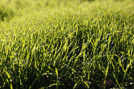Green grass - JTF000722