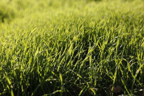 Green grass - JTF000722