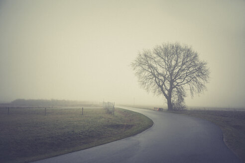 Germany, Brandenburg, tree in fog at country road - ASCF000423