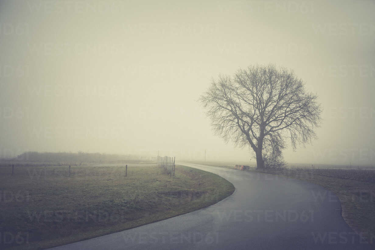 Germany, Brandenburg, tree in fog at country road - ASCF000423 - Anke Scheibe/Westend61