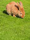 Rabbit on a meadow - KRPF001690