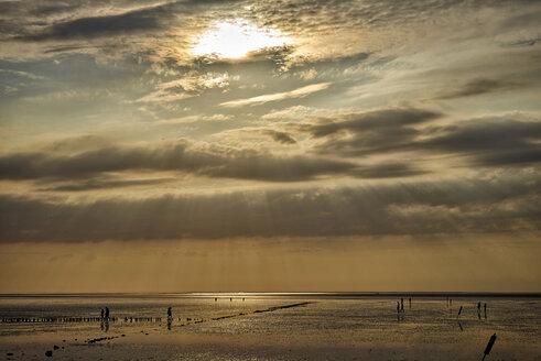Germany, Dithmarschen, Friedrichskoog-Spitze, Sunset at the North Sea tidelands - DIKF000169