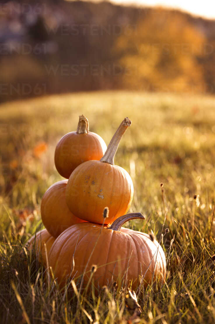 Pile of pumpkins on a meadow - MIDF000713 - Miriam Dörr/Westend61