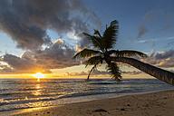 Seychelles, Praslin, Anse Kerlan, Coconut palm and Cousin Island at sunset - FOF008381