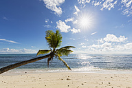 Seychelles, Praslin, Anse Kerlan, coconut palm and Cousin Island - FOF008384