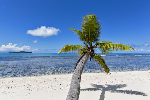 Seychelles, Praslin, Anse Kerlan, coconut palm and Cousin Island - FOF008387