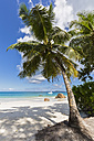 Seychelles, Praslin, Anse Lazio, catamaran, palm on beach - FOF008393