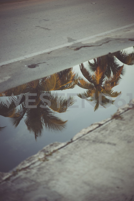 USA, Florida, Key West, palm trees reflecting in a puddle - CHPF000200