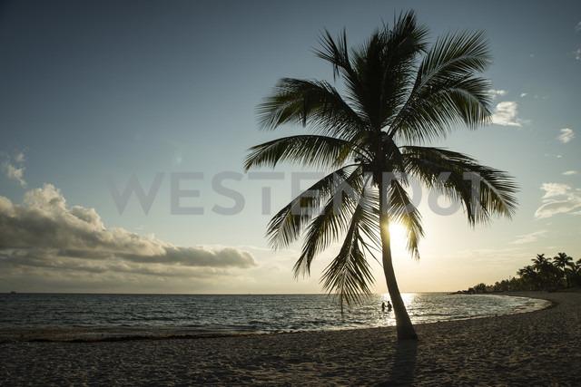 USA, Florida, Key West, palm tree on beach in backlight - CHPF000209