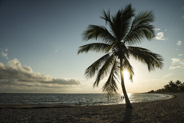 USA, Florida, Key West, palm tree on beach in backlight - CHPF000209