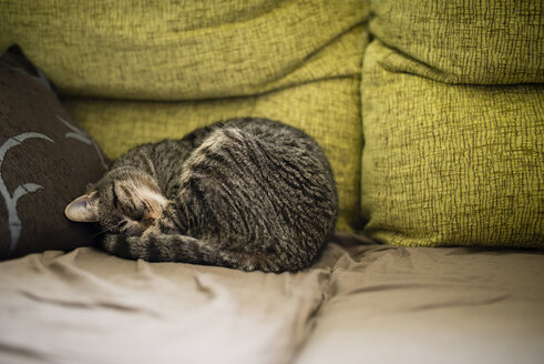 Tabby cat sleeping on the couch - RAEF000786