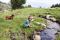 Spain, Cerdanya, little boy playing on a meadow at a brook - VABF000074