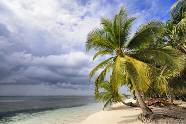 Panama, San Blas Islands, Isla Chichime - STEF000156
