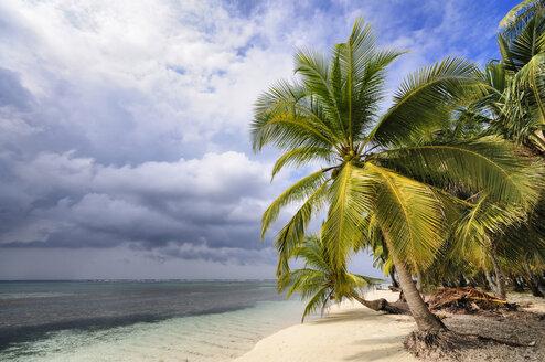 Panama, San Blas Islands, Isla Chichime - STEF000156
