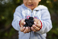 Hands of little boy holding blackberries - VABF000090