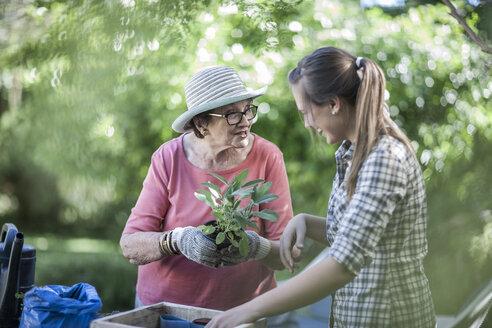 Senior woman and teenage girl gardening together - ZEF008287