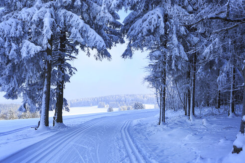 Germany, Thuringia, Wintry forest with ski tracks near Masserberg - VTF000501