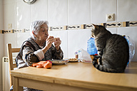 Senior woman eating while the cat watching her - RAEF000820
