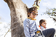 Two little boys playing in a tree - VABF000115