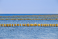 Germany, Mecklenburg-Western Pomerania, Prerow, Baltic Sea, breakwater, Western Pomerania Lagoon Area National Park - SIEF006930