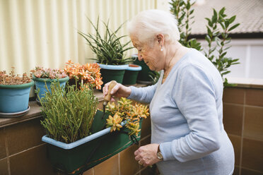 Senior woman gardening on her balcony - GEMF000681