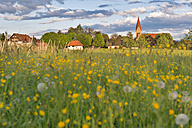 Germany, Langenargen, Oberdorf, Flowering meadow and church of St.Wendelin - SHF001828