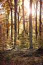 Germany, Duesseldorf, Benrath forest, Trees and sunshine in autumn - GUFF000256