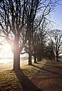 Germany, Neuss, treelined path at morning backlight in winter - GUFF000268