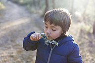 Little boy smelling blossoming twig of rosemary - VABF000126