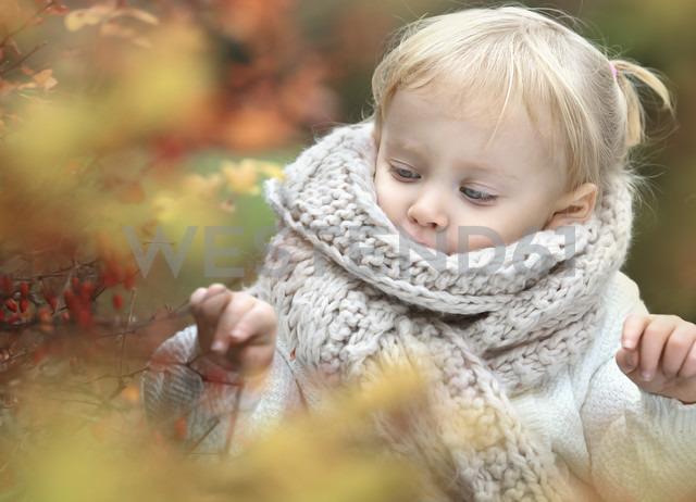 Portrait of little blond girl wearing big scarf in autumn - NIF000077 - Nailia Schwarz/Westend61