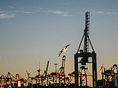 Germany Harbour, Crane facility, flying seagull in the evening - KRPF001713