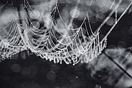 Wet spider net, close up, monochrome - DWIF000689