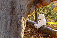 White teddy bear sitting on dead wood in the forest - CHAF001648