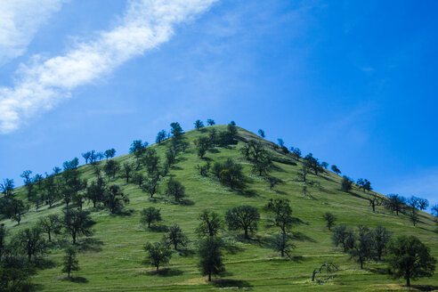 USA, California, green hill - NGF000285