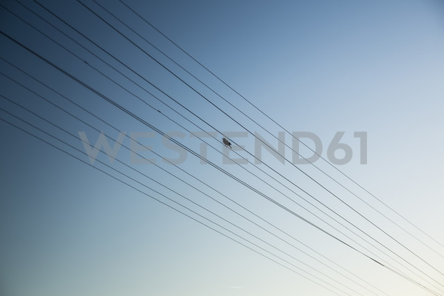 Bird perching on power supply line - NGF000288 - Nadine Ginzel/Westend61