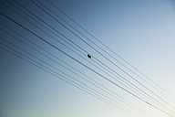 Bird perching on power supply line - NGF000288