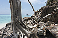 Thailand, Bamboo Island, bizarre tree roots - JATF000843