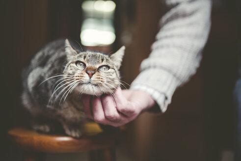 Man's hand stroking tabby cat - RAEF000862