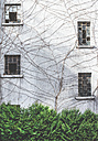 House facade with broken windows and dead creeping plant - DEGF000616
