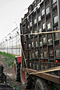 Stacks of boxes with tomatoes on trailer - CSTF000904