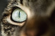 Cat eye, close-up - RAEF000886