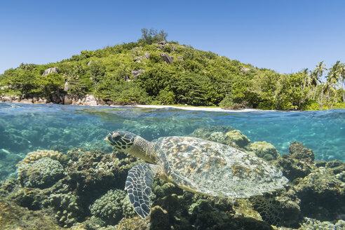 Seychelles, Big Sister Island, hawksbill sea turtle, Eretmochelys imbricata - FOF008459