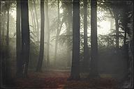 Germany, forest in fog - DWIF000700