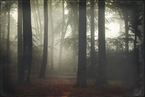 Germany, forest in fog - DWIF000700