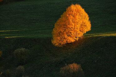 Spain, Asturias, autumnal tree at Natural Park of Fuentes del Narcea, Degana and Ibias - DSGF000947