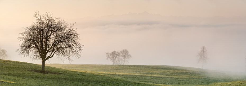 Germany, Markdorf, Bare trees and meadows in fog with Alps in background - SH001898