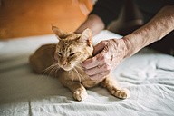 Senior woman's hands stroking tabby cat lying on bed - RAEF000911