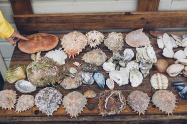 Assortment of different crabs and mussels - MJF001810