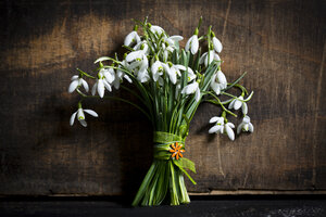 Bunch of snowdrops in front of dark wood - MAEF011355