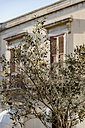 Italy, Sicily, olive tree, house in the background - CSTF000958